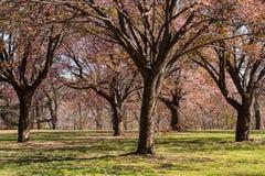 发芽的春天树 库存图片