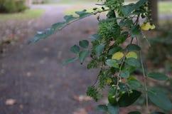 发芽的植物在公园 免版税库存照片