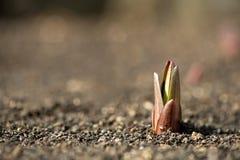发芽的植物在春天庭院里 库存图片