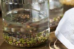 发芽的浸泡的豆 免版税库存照片