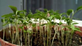 发芽的种子去的绿色都市种田 库存照片