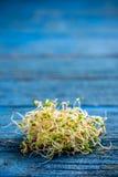 发芽的红三叶草种子 库存照片