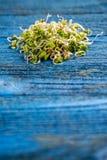 发芽的萝卜种子 免版税库存图片