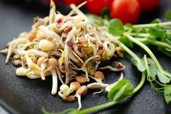 发芽的豆种子和胡麻沙拉用鲕梨 长寿的食物的概念 图库摄影