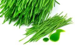 发芽的麦子和wheatgrass汁液 免版税库存照片