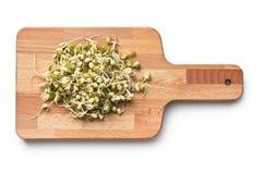 发芽的绿豆 免版税库存照片