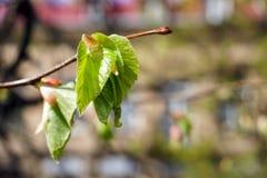 发芽芽在春天 库存照片