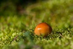 发芽蘑菇 免版税库存图片