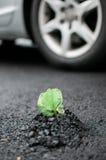 发芽通过沥青的植物 库存图片