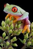 发芽青蛙结构树 免版税库存图片