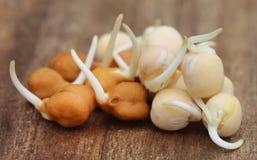 发芽鹰嘴豆和绿豆 图库摄影
