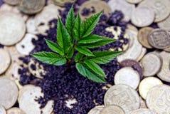 发芽从地球和硬币的绿色植物 免版税库存照片