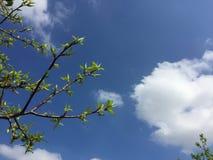 发芽从树的叶子 库存照片