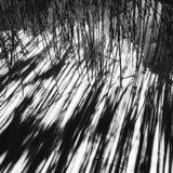 头发草的抽象阴影 图库摄影
