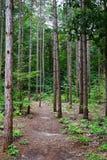 发辫树干与路的在公园在10月 免版税图库摄影