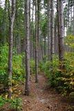 发辫树干与路的在美国的公园在10月 免版税库存图片