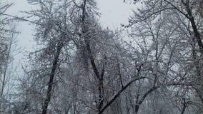发辫看法与降雪的 免版税库存照片