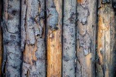 发隆隆声的木纹理 免版税库存照片