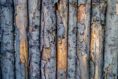 发隆隆声的木纹理 免版税库存图片