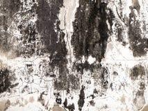 发霉在墙壁白色在我的家 库存图片