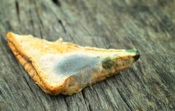 发霉的三明治 库存照片