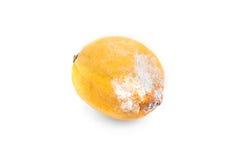 发霉的柠檬 免版税库存照片