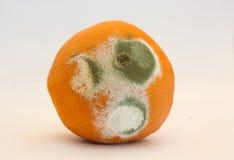 发霉的桔子 免版税库存照片