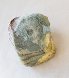 发霉的面包 免版税库存图片