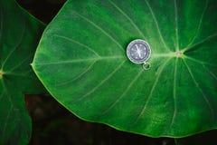 取向概念-放置在巨大的深绿色的莲花叶子的类推指南针 库存照片