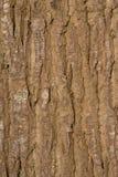 取暖一棵大树的吠声的细节在阳光下 库存照片