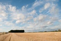 取暖在夏天太阳的草 库存图片
