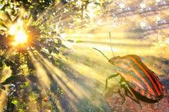 取暖在阳光(宏指令)下的镶边甲虫 免版税图库摄影