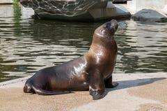 取暖的海狮在阳光下 免版税库存照片