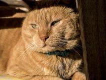 取暖的猫在阳光下 库存照片