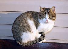 取暖的猫在阳光下 免版税库存照片