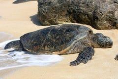 取暖的绿色夏威夷海运星期日乌龟 免版税库存照片