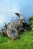 取暖鳄鱼的美国人 库存图片