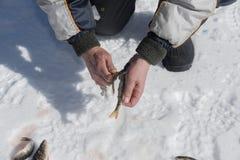 取消一个栖息处的皮肤的渔夫在一好日子在山的一个冻湖 库存图片