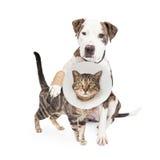 受伤的狗和猫一起 免版税库存照片