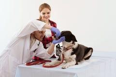 受到检查在有他们的所有者的狩医的狗 免版税库存图片