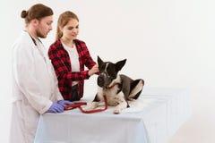 受到检查在有他们的所有者的狩医的狗 库存图片