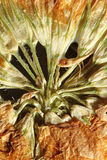 受影响的吠声是浆果蓝色分行棕色上升的复合黑暗的交易结尾秋天系列花分叉果子灰色绿色有7月延迟小叶叶子藤本植物园林植物点放热的红色霜锐利棚子词根夏天线程数藤将的五 库存图片