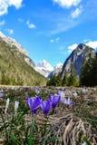 受欢迎的春天 库存照片