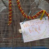 受欢迎的鸟笼 库存照片