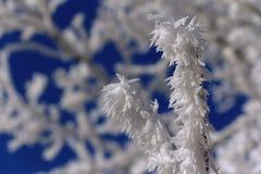 受霜害枝杈在与蓝天的冷淡的天 免版税库存照片