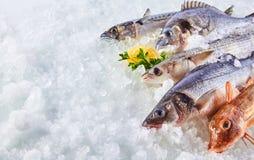 变冷在冰床上的生鱼品种  库存图片