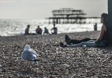 变冷在海滩 免版税库存照片