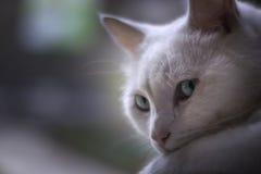 变冷在窗口的白色猫 免版税库存照片