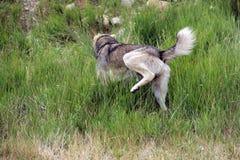 变冷在草的狗 免版税库存照片