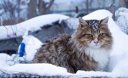 变冷户外在冬天期间的虎斑猫 免版税库存图片